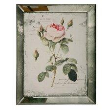 English Rose Framed Graphic Art