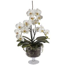 Glass Vase with Medium Orchid Phalaenopsis