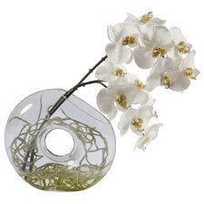 Glass Vase with Small Orchid Phalaenopsis