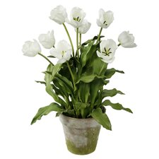 Clay Pot with White Tulips