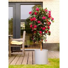 "60"" Artificial Bougainvillea Plant"