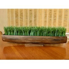 Wheat Grass in Unique Wood Planter