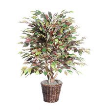 <strong>Vickerman Co.</strong> Blue Mystic Ficus Tree in Basket