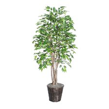 <strong>Vickerman Co.</strong> Blue Ridge Fir Executive American Elm Tree in Basket
