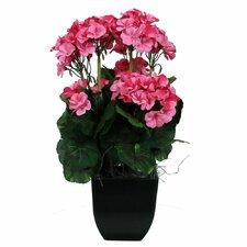 Floral Geranium in Pot