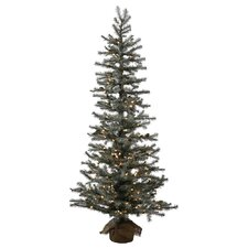 Frosted Pistol 4' Pine Tree Artificial Christmas Tree with 70 Clear Lights