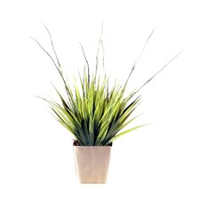 Floral Grass in Square Pot