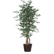 "Executive 72"" Artificial Potted Natural Variegated Ficus Tree in Green"