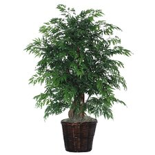 Deluxe 4' Artificial Potted Natural Ming Aralia Tree in Dark Green