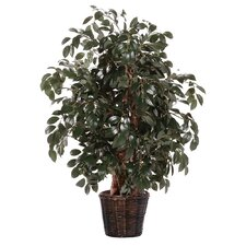Deluxe Artificial Potted Natural Sakaki Tree in Basket