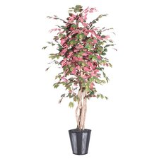 Blue Ridge Fir Executive Capensia Tree in Metal Pot