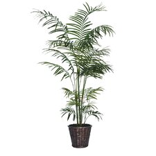 Deluxe Tropical Palm Tree in Basket