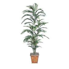 Deluxe Areca Palm Tree in Planter