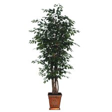 Blue Ridge Fir Executive Ficus Tree in Metal Pot