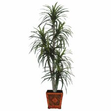 Blue Ridge Fir Executive Permanent Marginata Tree in Wood Pot