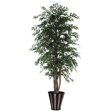 Blue Ridge Fir Executive Smilax Tree in Pot