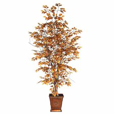 Blue Ridge Fir Executive Golden Birch Tree in Metal Pot