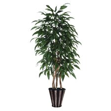 Blue Ridge Fir Executive Mango Tree in Metal Pot