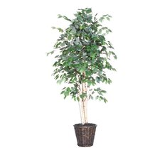 Blue Ridge Fir Executive Paper Birch Tree in Basket