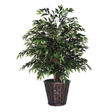 Blue Smilax Tree in Basket