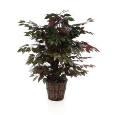 <strong>Vickerman Co.</strong> Deluxe Artificial Potted Natural Capensia Tree in Basket
