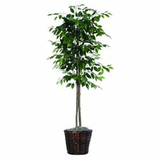 "Designer 72"" Artificial Potted Natural Ficus Tree in Dark Green"