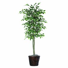 Economy 6' Artificial Potted Natural Variegated Ficus Tree in Dark Green