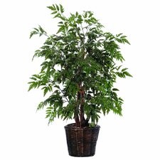 Bushes 4' Artificial Potted Natural Ming Aralia Tree in Green