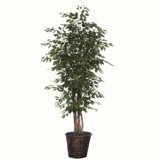 <strong>Vickerman Co.</strong> Blue Ridge Fir Executive Ficus Tree in Basket
