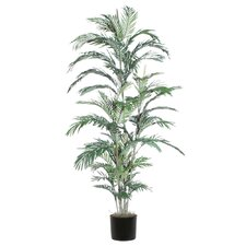 Extra Full Areca Palm Tree in Pot