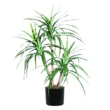 Extra Full Marginata Tree