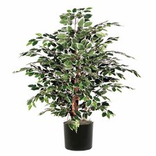 <strong>Vickerman Co.</strong> Extra Full Bush Variegated Tree in Pot