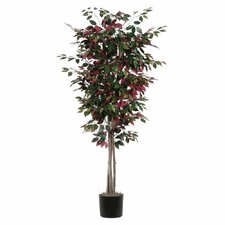 Capensia Deluxe Tree in Pot