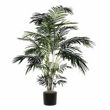 Extra Full Tropical Palm Tree in Pot
