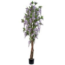 Wisteria Tree in Pot