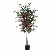 Nisswa Berry Capensia Tree in Pot