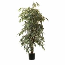 Ridge Fir Variegated Smilax Executive Tree in Pot