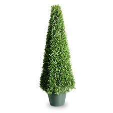 Boxwood Mini Square Topiary with Green Pot