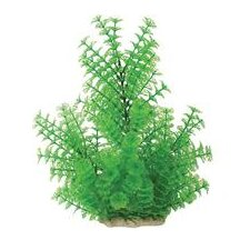 Natural Elements Ambulia Aquarium Ornament in Green