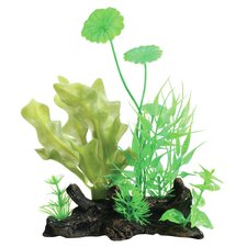 Tropical Elements Ulvaceus Hydrocotyle Combo