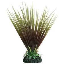 Tropical Elements Hairgrass