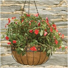 Queen Elizabeth Hanging Basket