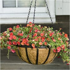 English Round Hanging Basket