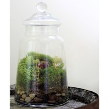 <strong>Twig Terrariums</strong> Enchanted Desk Top Plant in Terrarium