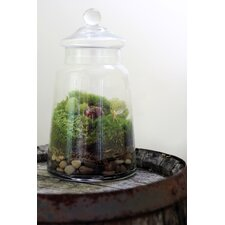 Enchanted Assembled Terrarium