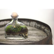 <strong>Twig Terrariums</strong> Piss off DIY Kit