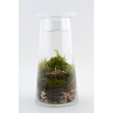 <strong>Twig Terrariums</strong> Zen Garden DIY Kit
