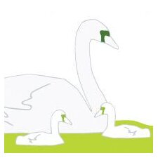 Animals Swan Stretched Canvas Art