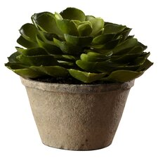 <strong>Sage & Co.</strong> Sonoran Highlands Echeveria Succulent Desk Top Plant in Pot