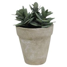 Sonoran Highlands Potted Hen and Chicks Desk Top Plant in Pot